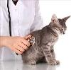 Ветеринарные клиники в Липином Бору